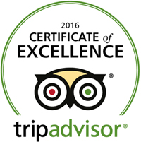 trip advisor award for excellence cayman horseback riding
